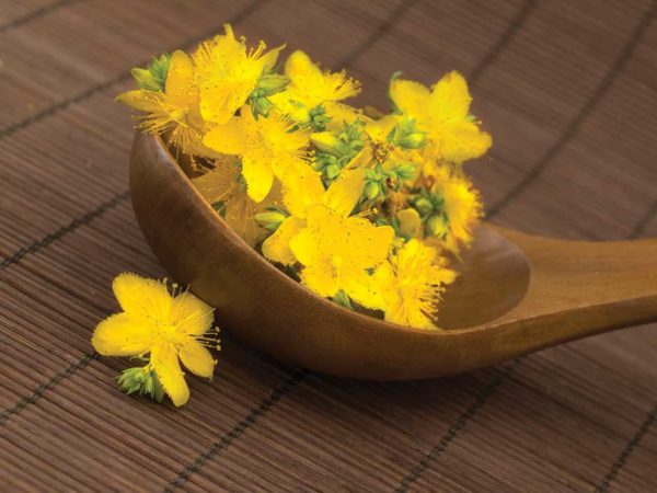 Wooden ladle filled with fresh St Johns Wort flowers